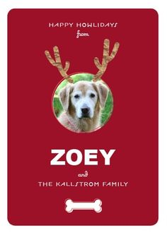 The perfect Christmas card for a dog-lover!  Upload your pet's picture and make it look like he/she has reindeer antlers.  Fun!