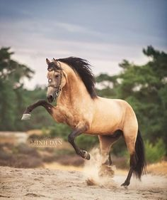Comment below if You like this ==>Double Tap and Tag your friend<== ============= Via: Funny Horses, Cute Horses, Horse Love, All The Pretty Horses, Beautiful Horses, Animals Beautiful, Majestic Horse, Majestic Animals, Horse Photos