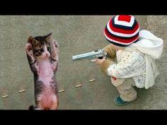 Cat memes, Pet Lovers