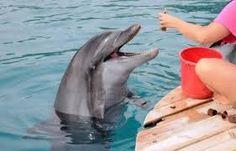 Hier krijgt een dolfijn vis