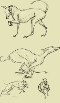 greyhounds_by_paso-d6cxt8c.jpg 527×900 pixels