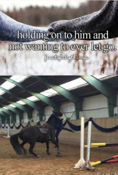 Just Girly Things - Horses Funny - Funny Horse Meme - - Ahhh. Just Girly Things The post Ahhh. Just Girly Things appeared first on Gag Dad. Pretty Horses, Horse Love, Beautiful Horses, Funny Horse Memes, Funny Horses, Horse Humor, Funny Humor, Equestrian Memes, Equestrian Problems