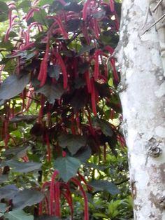 a decorative plant