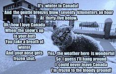 Canadian Humor: Canadian Winter hahaha the truth! Canadian Cat, Canadian Memes, Canadian Things, Canadian Humour, Alberta Canada, Canada Winter, O Canada, Canada Snow, Calgary