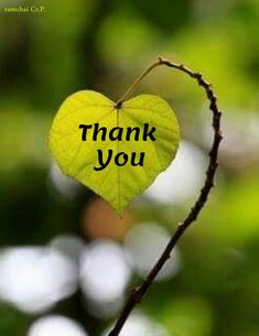Thank You Messages Gratitude, Thank You Messages For Birthday, Birthday Wishes And Images, Birthday Wishes Quotes, Congrats Wishes, Thank You Wishes, Thank You Quotes, Congratulations, Thank You Msg