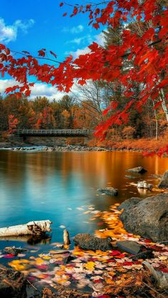 Nadire Atas on Beautiful Autumn Scenes Beautiful. Fall Pictures, Fall Photos, Nature Pictures, Beautiful World, Beautiful Places, Beautiful Pictures, Beautiful Scenery, Landscape Photography, Nature Photography