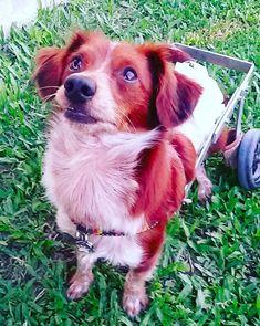 Perceber que ele se está muito melhor agora com você, apesar de todas as dificuldades. | 10 felicidades que só quem adotou um cachorro poderia viver