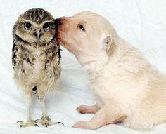 He doesn't seem to be enjoying those kisses.