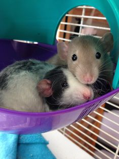 """ratnow: """" my babies are the cutest and nothing you say will convince me otherwise ❤️ """""""