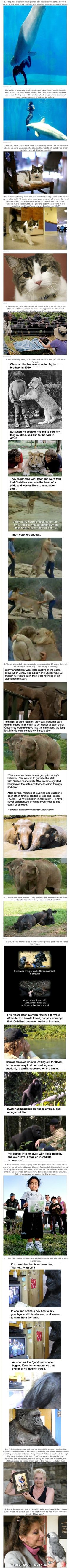 Its always heart warming to read such stuff... Animals are the best souls!