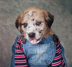 Projeto reúne cães vestidos com roupas para chamar a atenção para adoção