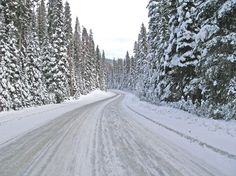 road with snow and trees