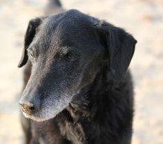 Dino, cane meticcio...anni 15