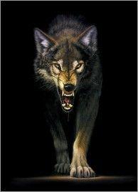 Chris Hiett - Heranschleichender Wolf