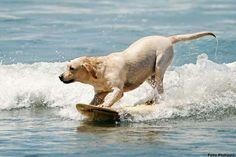 Dog suf