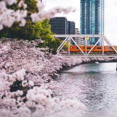 #sakura  #osaka #japan  #streetphotography #streetdreamsmag  #fujifilmxt10 #fujifilm_xseries #fujifilm #fujifeed #fujixclub #ink361 #ink361_asia #instagramjapan #ig_japan #IGersJP #igersjapan #icu_japan #vscocam #vsco #team_jp_ #team_jp_西 #reco_ig #explorejapan #cityexplore #indies_gram #huntgramjapan #jp_views #hueart_life #写真撮ってる人と繋がりたい #写真好きな人と繋がりたい