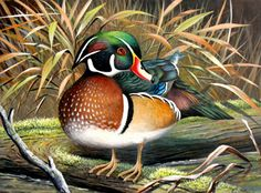 oil painting duck - Google Search