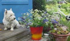Onni toivottaa hyvää kesää mökin portailta.