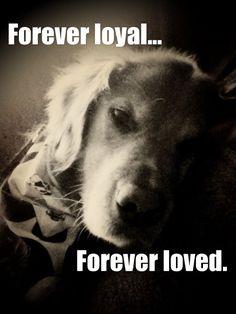 Forever loyal...forever loved.