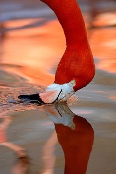 Flamingo | Xavier Ortega