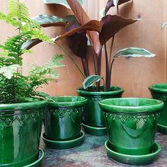 Vackraste krukorna från Bergs Potter! Dansk design och handgjorda i Toscana, Italien. Finns även i grå och ljus teracotta. . . . #absmåland #absmaland #malmö #malmø #krukor #bergspotter #plants #terracotta #grönt #skönt #inredning