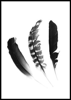Art photo print Chic Trio features contrasting feathers in black and white Scandinavian-style wall art. Shop exclusive, original photography artwork from Opposite Wall, the perfect addition to the minimalist home decor. Black And White Artwork, Black And White Posters, Black And White Interior, Black N White Images, White Wall Decor, Black Decor, Minimalist Home Decor, Minimalist Décor, Hand Drawing Reference