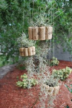 hanging-air-plant-basket