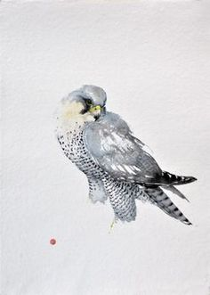 Karl Martens 'Peregrin Falcon' Watercolour