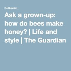 Ask a grown-up: how do bees make honey? | Life and style | The Guardian