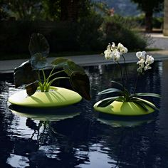 1000 images about floating on water planters on pinterest for Floating plant pots