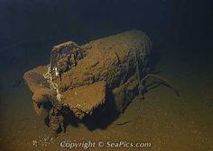 Still live 1000 pound bomb strapped down in ship wreck USS Saratoga, Bikini Atoll, Marshall Islands, Micronesia, Pacific