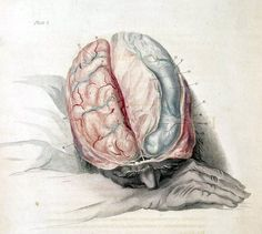 Your Brain on Ketones -  How a high-fat diet can help the brain work better