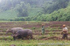 Myanmar. Senderismo en Hsipaw