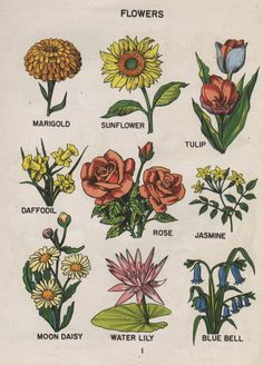 Inspiration for my wildflower / floral tattoo!