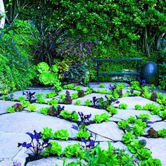 Salad bar tapestry - Planting between the pavers in the backyard, Randi Herman used a mix of lettuces and beets.