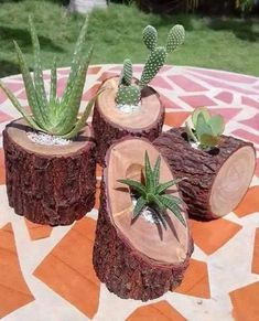 ¡Me encantan estas suculentas macetas de ramas! Diy Wooden Planters, Log Planter, Planter Ideas, Tree Planters, Wooden Diy, Cacti And Succulents, Planting Succulents, Cactus Plants, Cacti Garden
