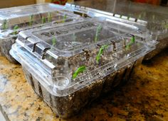Seed Starting Cheap Mini Greenhouses for Seed Starting ~Family Food Garden - Great indoor mini greenhouses! Use a mini greenhouse for seed starting or to grow small plants. An indoor greenhouse takes up less space Indoor Greenhouse, Greenhouse Gardening, Container Gardening, Gardening Tips, Greenhouse Ideas, Organic Gardening, Indoor Gardening, Diy Mini Greenhouse, Succulent Containers
