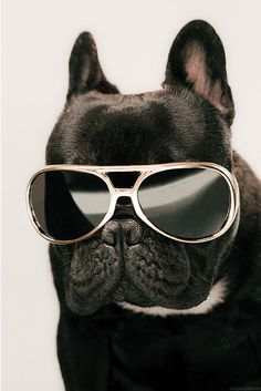 Love In The Dark.. keep true to yourself. Happy Friday Meme, Its Friday Quotes, Friday Memes, Dog With Glasses, Cats With Big Eyes, Cats Bus, Wearing Glasses, Trying To Lose Weight, Hello Beautiful