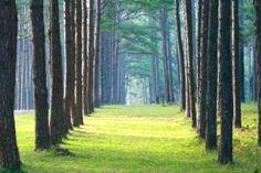 Path-teoria Trunks, Plants, Drift Wood, Planters, Plant, Planting