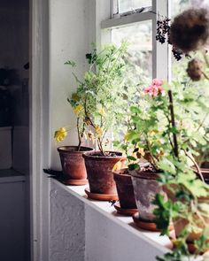 A magical home and a windowsill full of life - recently snapped when we met and photographed the artist Clara Drummond. We discovered a shared love for scented pelargoniums and unruly kitchen gardens