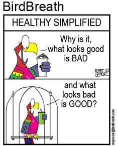 BirdBreath t-shirts and merchandizse Funny Birds, Parrot, Cartoons, Family Guy, Comics, Healthy, T Shirt, Life, Fictional Characters