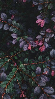 Black Wallpaper Lockscreen Rebel In A New Dress dark plants Wallpaper Tumblr Lockscreen, Iphone Wallpaper, Plant Wallpaper, Flower Wallpaper, Nature Wallpaper, Phone Backgrounds, Wallpaper Backgrounds, Lock Screen Wallpaper, Horticulture