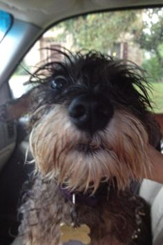 Guess who got loose and had to be chased down in the rain today! - Imgur