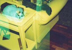 Smena 35 + Holga ColorGelFlash — lucioflajore · Lomography