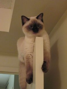 There's nothing better than finding cats in unexpected places.  I had a siamese who actually jumped to the top of doors!