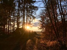 Tue dir Gutes - Waldspaziergang Country Roads, Celestial, Sunset, Outdoor, Old Trees, Light And Shadow, Hang In There, Outdoors, Sunsets
