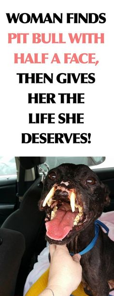 Oh the feels! This dog and this woman are AMAZING! :