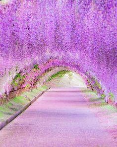 Wisteria, Kawachi Fuji Gardens, Japan by in 2020 Beautiful Nature Wallpaper, Beautiful Landscapes, Beautiful Gardens, Beautiful Images, Beautiful Flowers Photos, Wisteria Garden, Wisteria Japan, Wisteria Tree, Fantasy Places