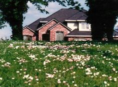 No-mow or low-mow eco-friendly lawns. Hobbs & Hopkins Ltd. | ProTime Lawn Seed | Fleur de Lawn