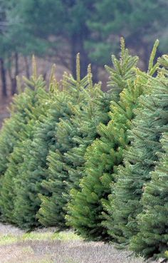 "I started to sell Christmas trees to pay winter bills.... My own family never knew how truly poor I was .....those years from early 1980's to almost 1993....were what I like now to look back and think "" wow! """